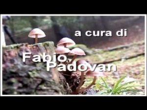 Leccinum Scabrum @ Conoscere i funghi 24.09.2014